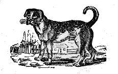 Resultado de imagem para ovelha e o cão fábula